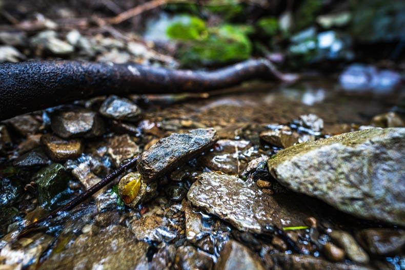 【森林セラピー】宍粟市国見の森公園ハイキングが超絶癒される