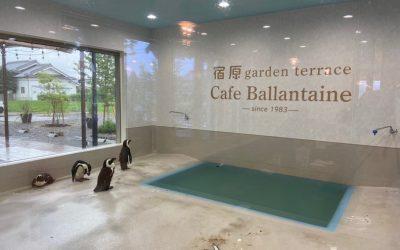 【ペンギンカフェ】三木市 Cafe Ballantaine で水族館気分を満喫!
