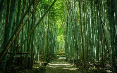 【姫路一の穴場】破磐神社われ岩・自然竹林の道