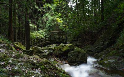 【播州の滝三兄弟】七種の滝への散歩道が超絶神秘的!