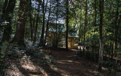 【加西市】神話の道と呼ばれる神秘的な森の中の通り 〜歴史の森特集〜