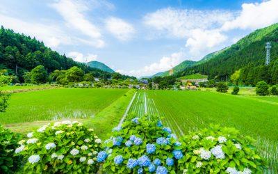 【日本一のあじさいの里】神河町猪篠(いざさ)の絶景
