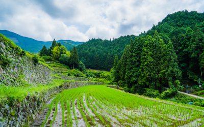 【美しい棚田】神河町奥猪篠の新緑光る田園風景