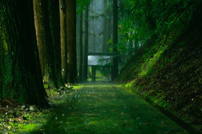 【加西市】河上山久学寺の苔の参道(忠臣蔵ゆかりの地)