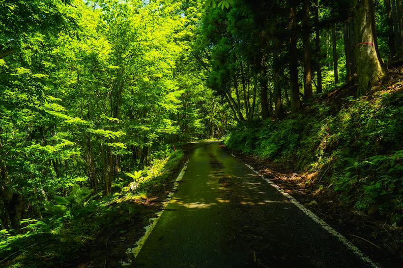 【神河町】砥峰高原〜福知渓谷への裏道・県道39号
