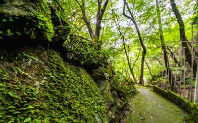 【たつの市】宮本武蔵も修行をした不動の滝