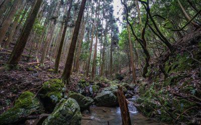 【宍粟市】国見の森にある比地の滝が爽快!